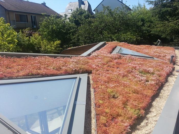 Maison dans le jardin : Toiture vegetalise
